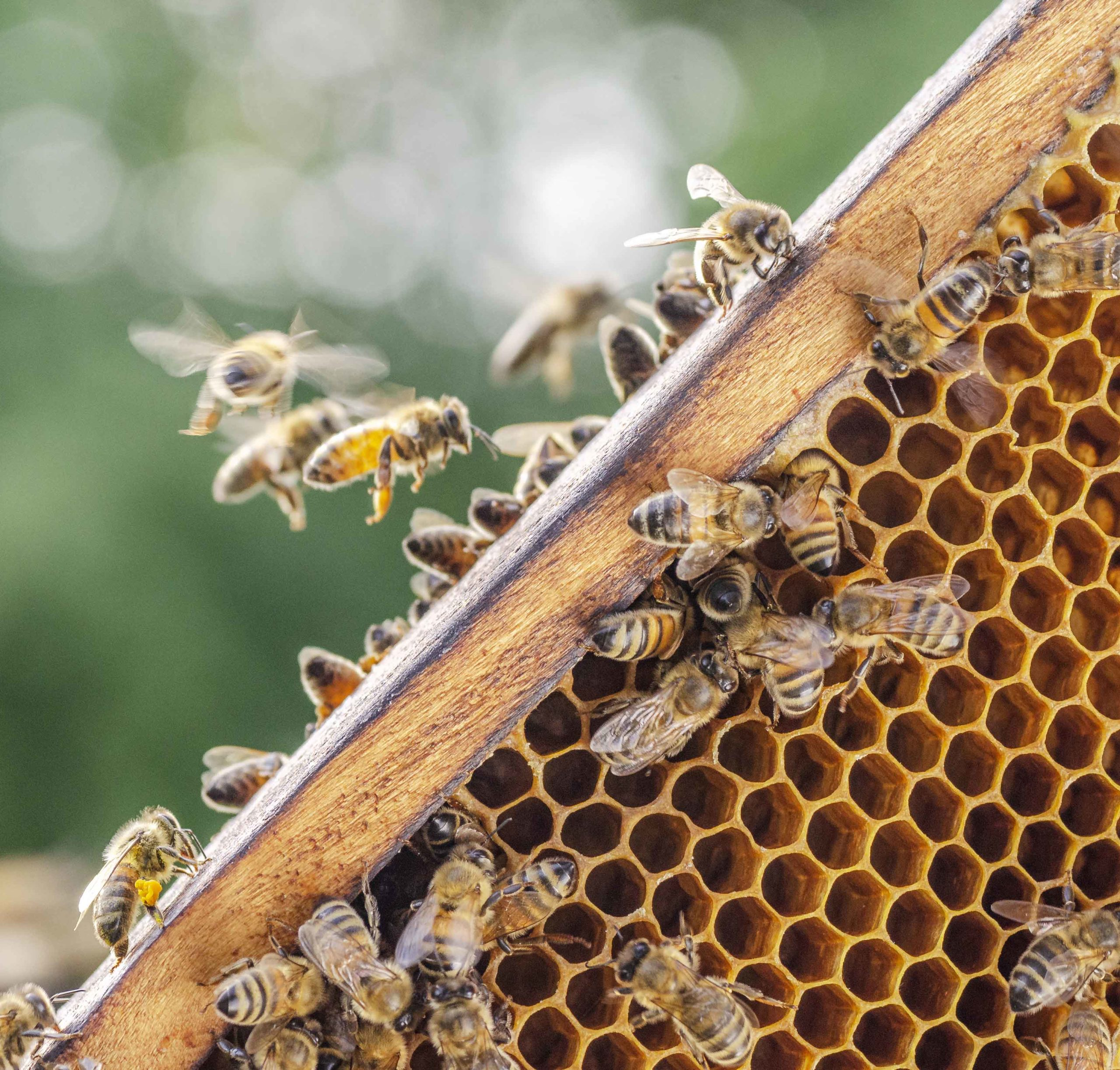 À la découverte de l'apiculture